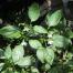 Thumbnail image for Mycogrow™ & The Jalapeño Pepper Plant
