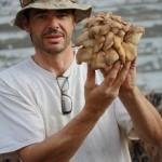 IMG 3115 e1303449118108 150x150 Colorado Oyster Mushrooms!